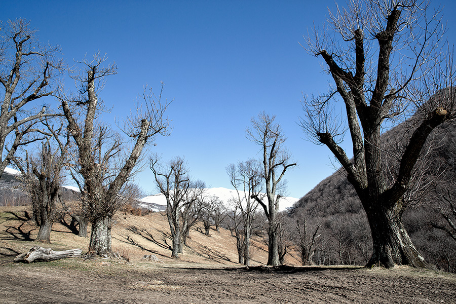 Selected landscapes on Offset