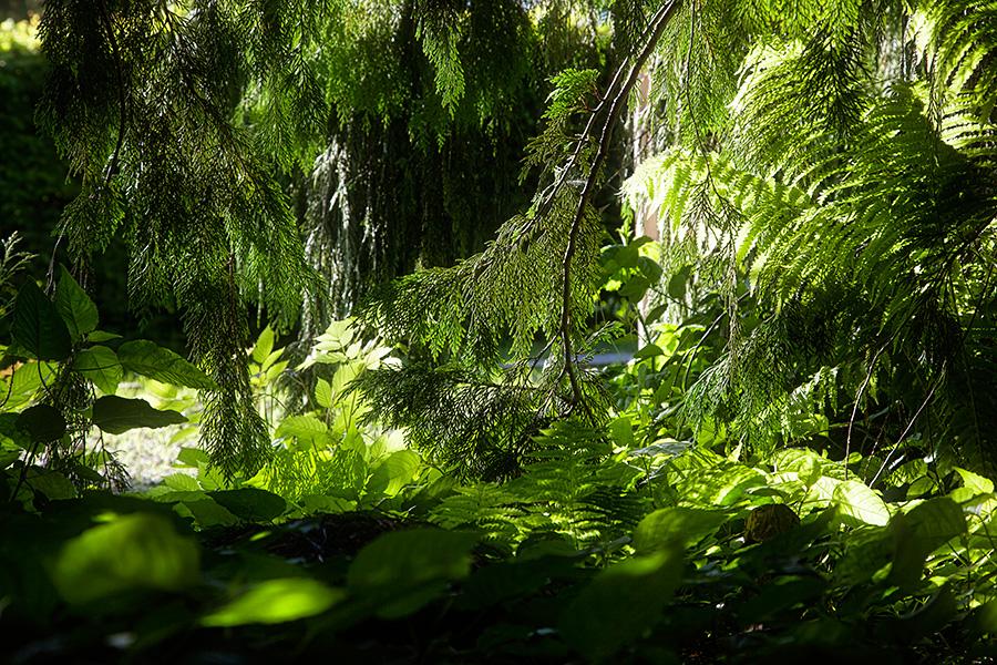 Ria's Garden